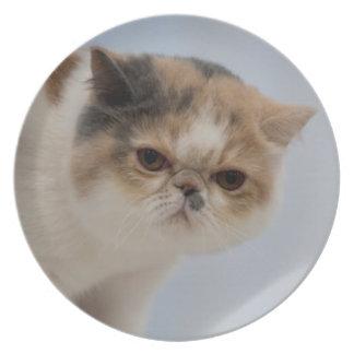 Grumpy Face Cat Melamine Plate