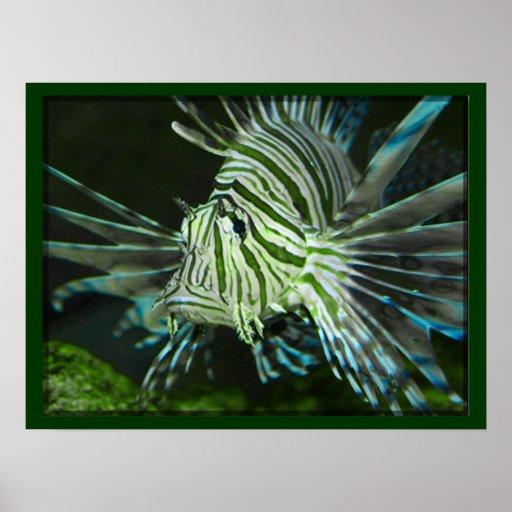 Grumpy Fish Poster