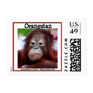 Grumpy Frown Orangutan Face Borneo Postage Stamp
