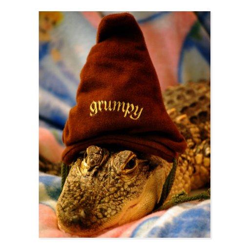 Grumpy Gator Postcard