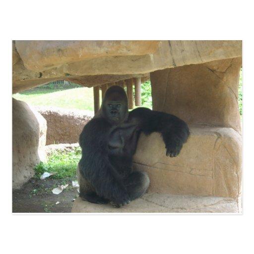 Grumpy Gorilla Postcards