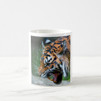Grumpy Kitty Classic White Coffee Mug