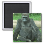 Grumpy Lowland Gorilla 2 Inch Square Magnet