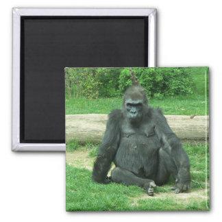 Grumpy Lowland Gorilla Magnet