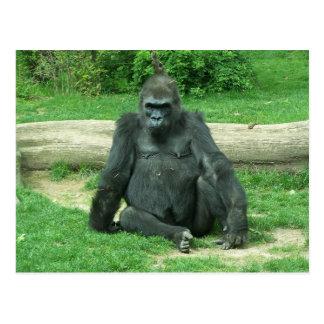 Grumpy Lowland Gorilla Postcard