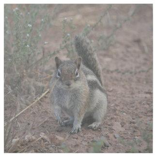 Grumpy Squirrel Gallery Wrap
