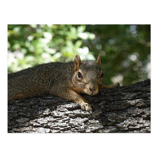 Grumpy Squirrel Postcard