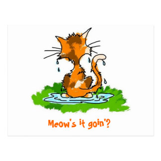 Grumpy Wet Cat Postcard
