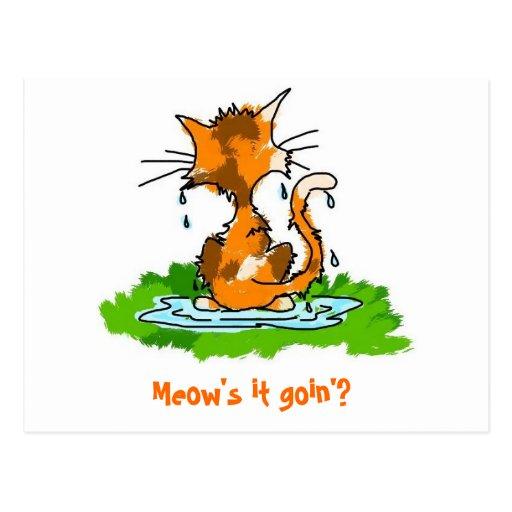 Grumpy Wet Cat Postcards
