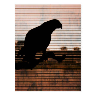 Grunge African Grey Parrot Silhouette Postcard