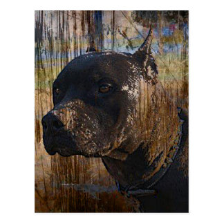 Grunge American Staffordshire Terrier Pitbull Postcard