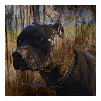 Grunge American Staffordshire Terrier Pitbull Poster