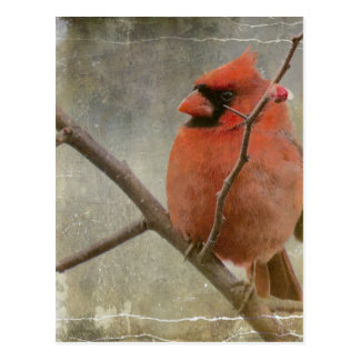 Grunge cardinal tarjeta postal
