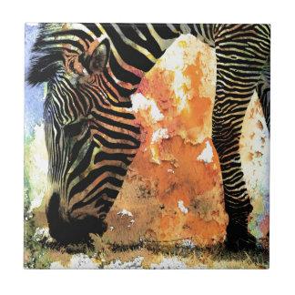 Grunge colorido de la cebra azulejo cuadrado pequeño
