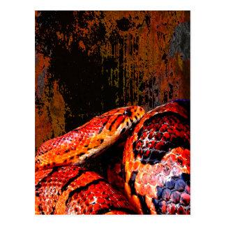 Grunge Corn Snake Coiled Post Card