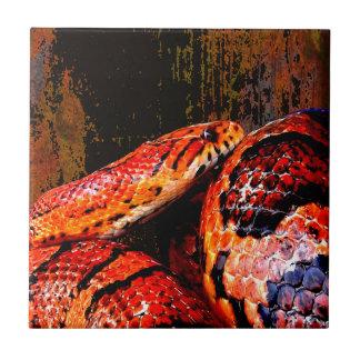 Grunge Corn Snake Coiled Tile
