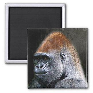 Grunge Lowland Gorilla Close-up Face Magnet