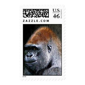 Grunge Lowland Gorilla Close-up Face Postage Stamps