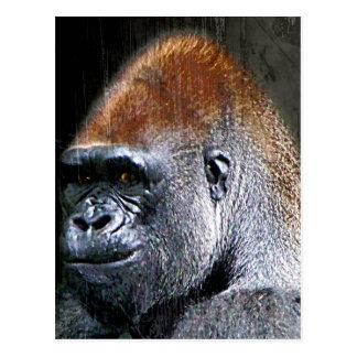 Grunge Lowland Gorilla Close-up Face Postcard