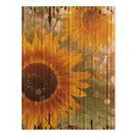 grunge modern country yellow Sunflower Postcard