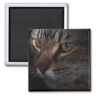 Grunge Tabby Cat Face in Shadow Magnet