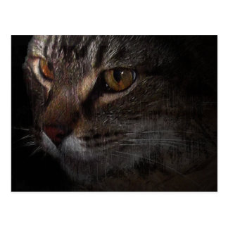 Grunge Tabby Cat Face in Shadow Postcard