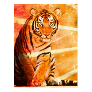 grunge vintage Japanese Tiger sunrays Postcard