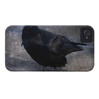 Grungy Raven; No Text iPhone 4 Case-Mate Cases