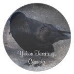 Grungy Raven; Yukon Territory Souvenir Plate