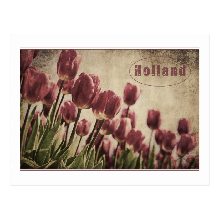 Grungy tulips from Holland Postcard