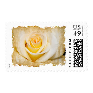 Grungy White Rose Postage