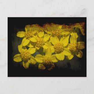 Grungy Yellow Wildflowers