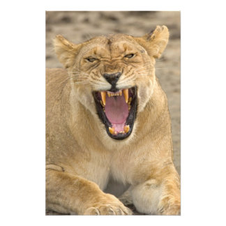 Gruñido B, la África del Este, Tanzania de la leon Fotografías