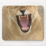 Gruñido B, la África del Este, Tanzania de la leon Mousepads