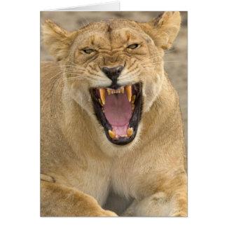 Gruñido B la África del Este Tanzania de la leon Tarjetas