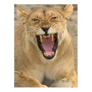Gruñido B, la África del Este, Tanzania de la leon Postal