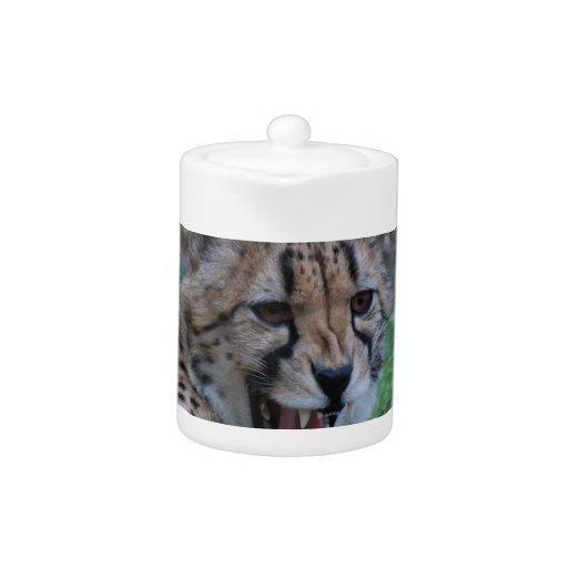 Gruñido del guepardo