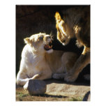 Gruñido del león y de la leona plantillas de membrete