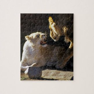 Gruñido del león y de la leona puzzles