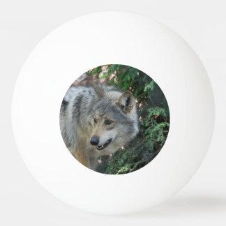 Gruñido del lobo pelota de tenis de mesa