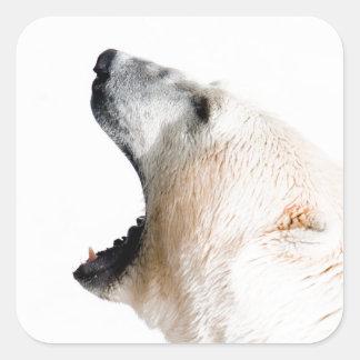 Gruñido del oso polar pegatina cuadrada
