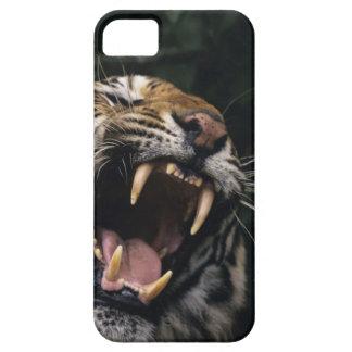Gruñido del tigre de Bengala (Panthera el Tigris e iPhone 5 Case-Mate Cárcasa