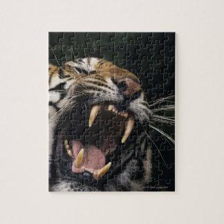 Gruñido del tigre de Bengala (Panthera el Tigris e Rompecabeza