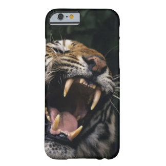 Gruñido del tigre de Bengala (Panthera el Tigris Funda De iPhone 6 Barely There