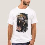 Gruñido del tigre de Bengala (Panthera el Tigris Playera