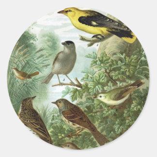 Grupo 2 del pájaro etiqueta redonda