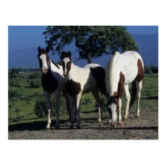 Grupo de caballos de la pintura tarjetas postales