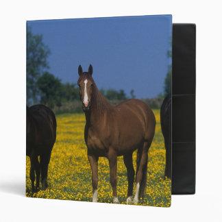 "Grupo de caballos excelentes carpeta 1"""