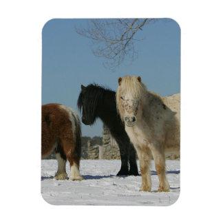Grupo de caballos miniatura en la nieve iman
