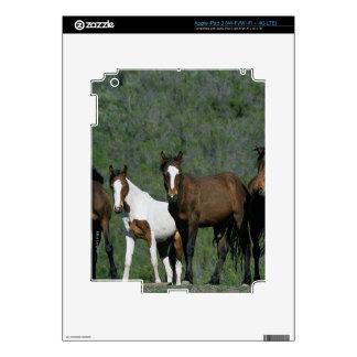 Grupo de caballos salvajes del mustango iPad 3 skin